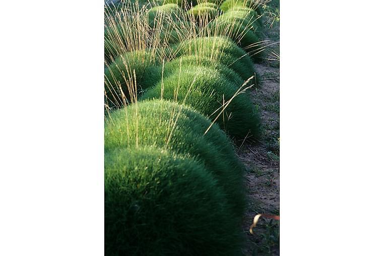 Björnsvingel 2l - Gul - Inredning - Dekoration - Konstgjorda växter