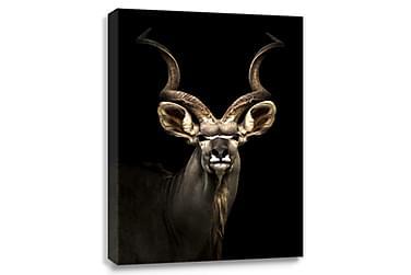 Antilop Digitalprintad Tavla Canvas 75x100cm