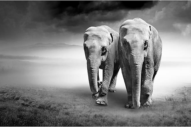Canvas Elephant 80x120 cm - Art Link - Inredning - Väggdekor - Canvastavlor