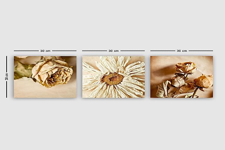 Canvastavla VP Italy 3-pack Flerfärgad - 30x30 cm - Inredning - Väggdekor - Canvastavlor
