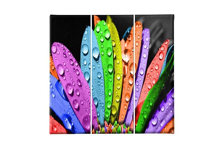 Färger Ramverk - Homemania - Inredning - Väggdekor - Canvastavlor