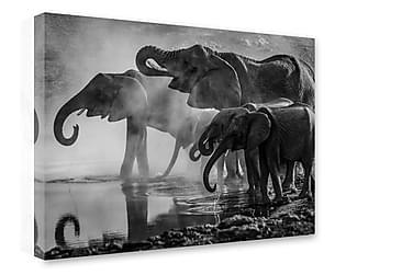 Tavla Elephants By Water