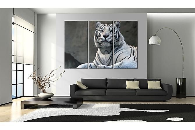 Tavla White Tiger 120x80 - Finns i flera storlekar - Inredning - Väggdekor - Tavlor & konst