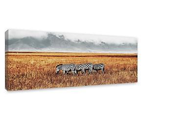 Tavla Zebra Herd