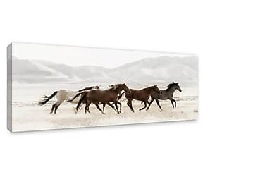 Tavla/Canvas Mustanger
