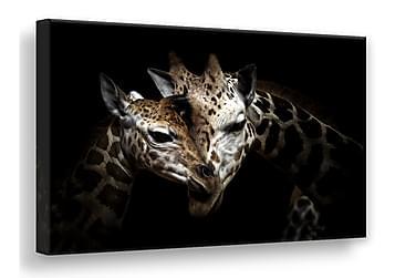 Wild Giraffes Tavla Canvas 75x100cm