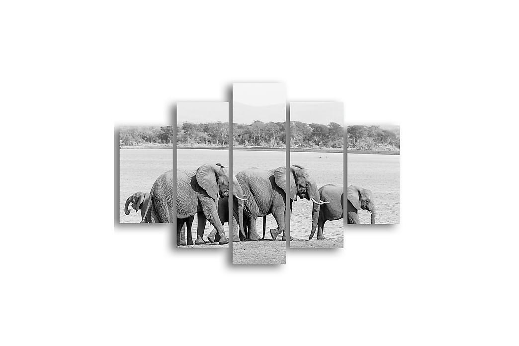 Väggramverk Elefanter Svartvit - Homemania - Inredning - Väggdekor - Plåtskyltar