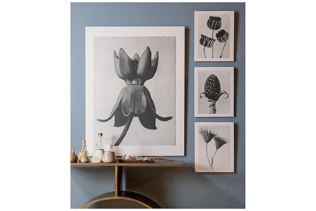 Poster Artwork Plantstudie 103 40x50 cm - Grå/Beige - Inredning - Väggdekor - Posters