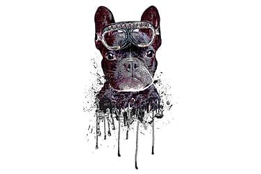 Poster Blue Dog