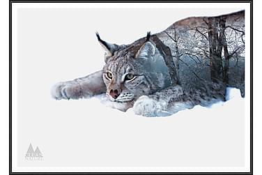 Tavla Lynx 70x50 cm