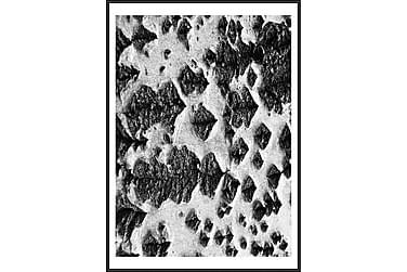 Tavla Träd 50x70 cm