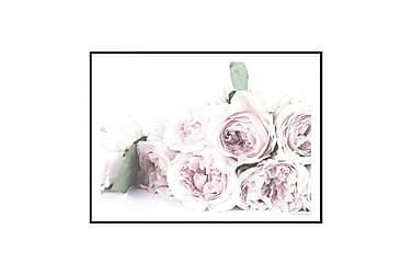 Poster Roses Pink